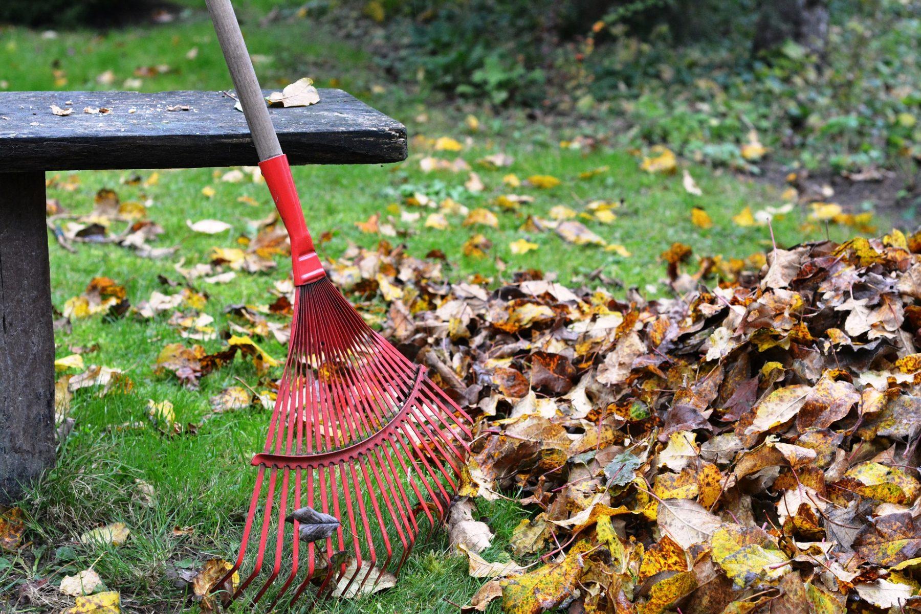 Environnement : laissez donc ces feuilles mortes par terre !